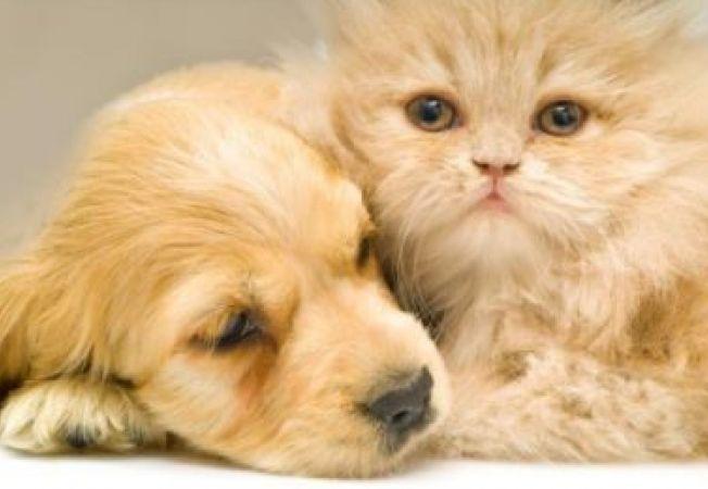 Care e diferenta dintre iubitorii de caini si cei de pisici?