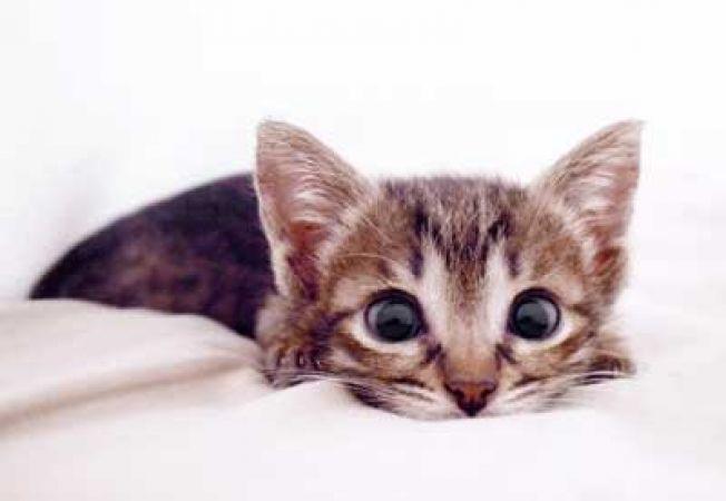 Cum sa rezolvi problemele de comportament ale pisicii tale