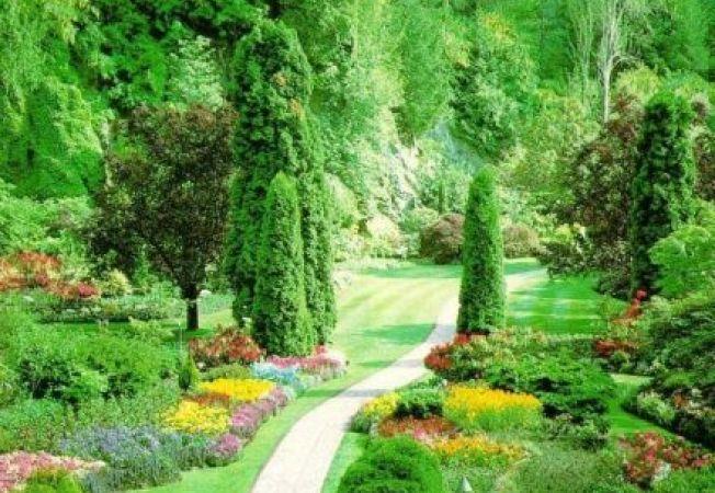 Cum sa plantezi copacul potrivit in locul potrivit - II