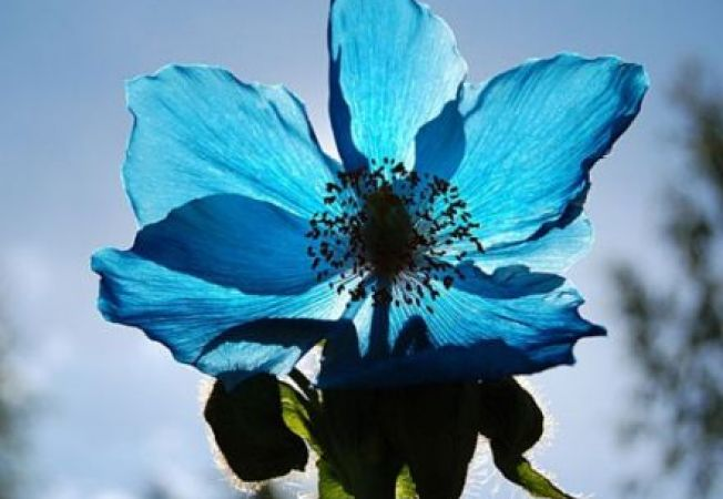 5 plante pe care sa eviti sa le aduci in gradina ta