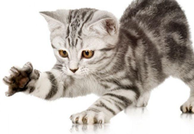 Ajuta pisica sa scape de purici!