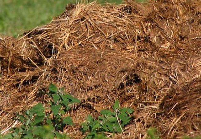 5 tipuri de ingrasamant organic si ce se ascunde in ele