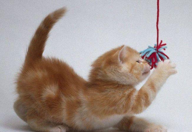 Cum ne-au imblanzit pisicile?