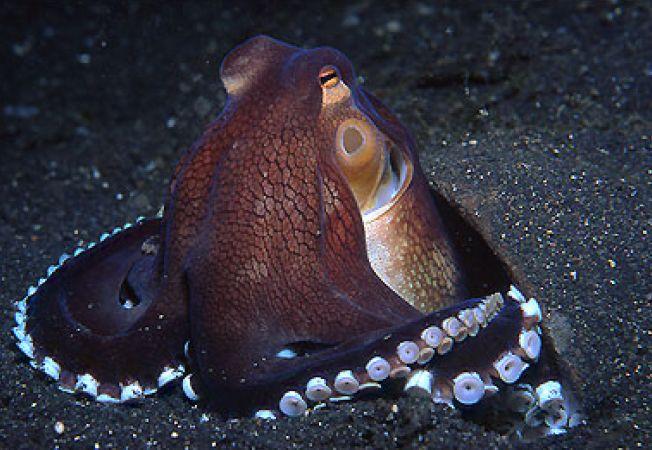 12 curiozitati despre moluste