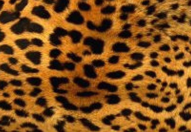 Cum porti  imprimeul de leopard