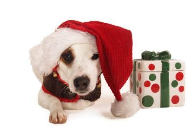 Vrei sa dai un animal cadou de Craciun?