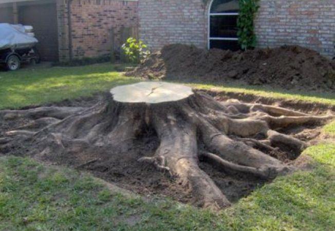 Metode de inlaturare a unui ciot de copac