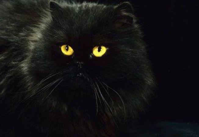 Pisica te trezeste cu noaptea in cap? Iata ce trebuie sa faci