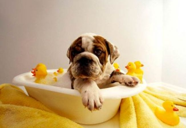 Cum convingi catelul sa stea cuminte cand ii faci baie?