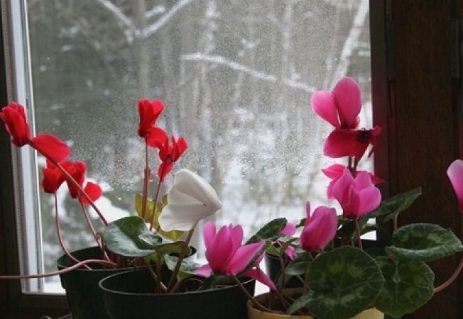 Probleme de iarna pentru plantele de interior