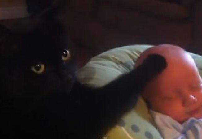 Pisica, cel mai bun baby-sitter