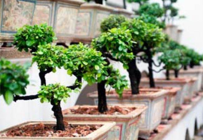 4 arbusti de interior, ideali pentru apartament