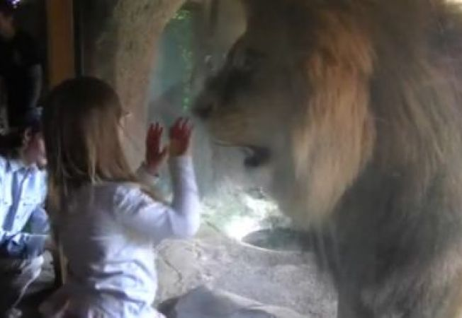 Momentul incredibil in care o fetita imblanzeste un leu