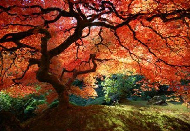 Cei mai interesanti copaci de mici dimensiuni
