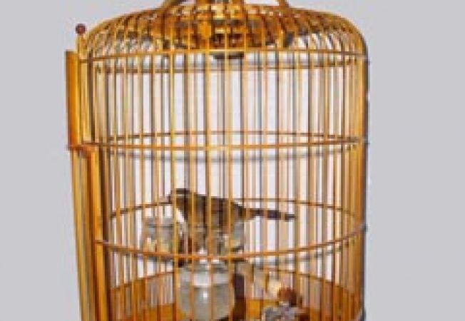 4 lucruri esentiale de care are nevoie o pasare de colivie