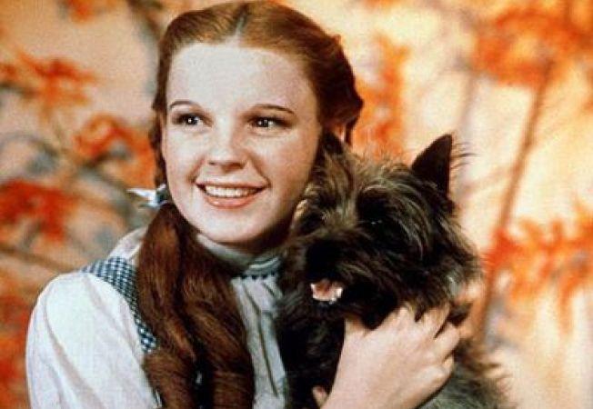 """Toto, din """"Vrajitorul din Oz"""", ar putea fi simbolul statului Kansas"""