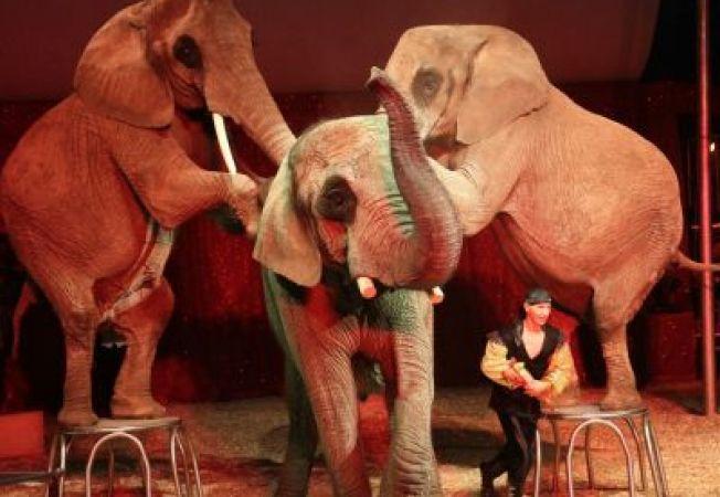 Grecia a interzis folosirea animalelor la circuri