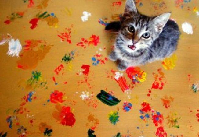 Pisicile Picasso strang bani pentru animalele abandonate