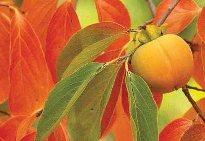 Cum sa alegi pomii fructiferi pentru plantare