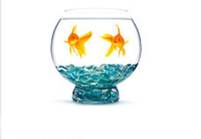 Cum sa formezi o pereche compatibila de pesti in acvariu