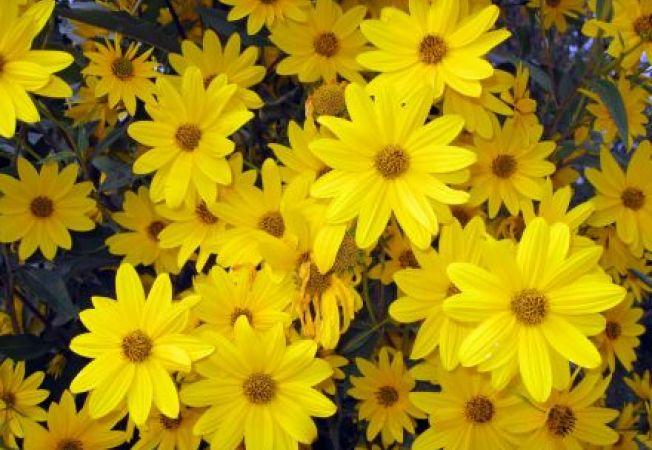 Cele mai bune plante pentru solul argilos