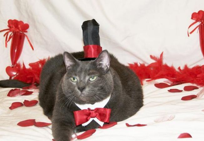 Pisicile abandonate isi gasesc dragostea pe Internet