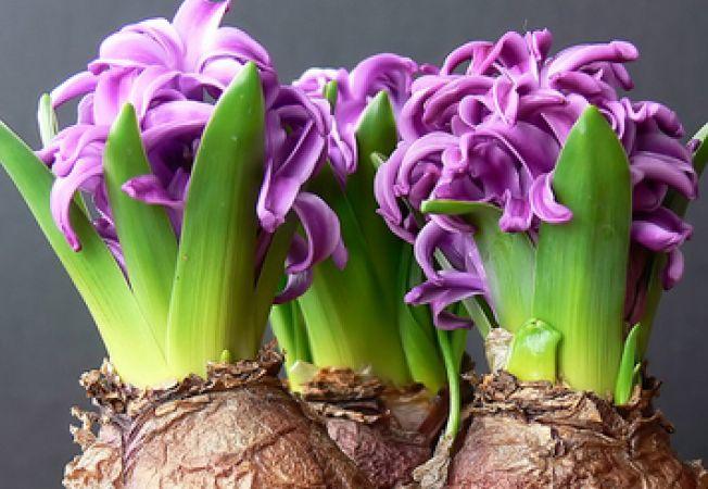 Cele mai frumoase flori decorative
