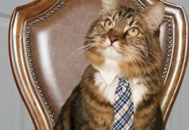 O pisica vrea sa fie senator de Virginia