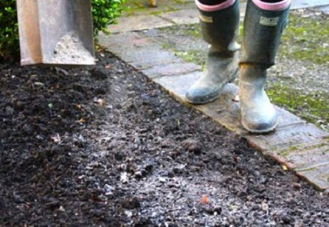 Cum folosesti cenusa de lemn in gradina de legume