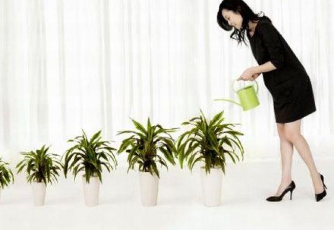 Ingrijirea plantelor de apartament: ce trebuie sa stii