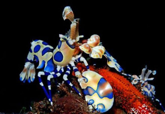 Premiile Oscar 2012 pentru animale: descopera castigatorii!