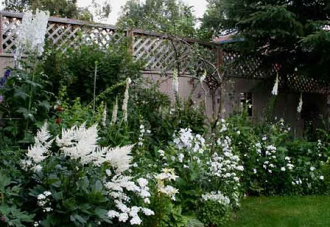 Gradina cu flori albe