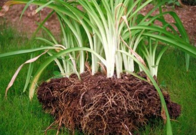 Primavara, perioada perfecta de separare a plantelor