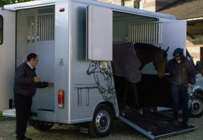 Transportul animalelor pe distante lungi, reglementat la maxim 8 ore in UE