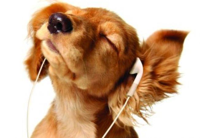 Cercetatorii au descoperit muzica preferata a animalelor
