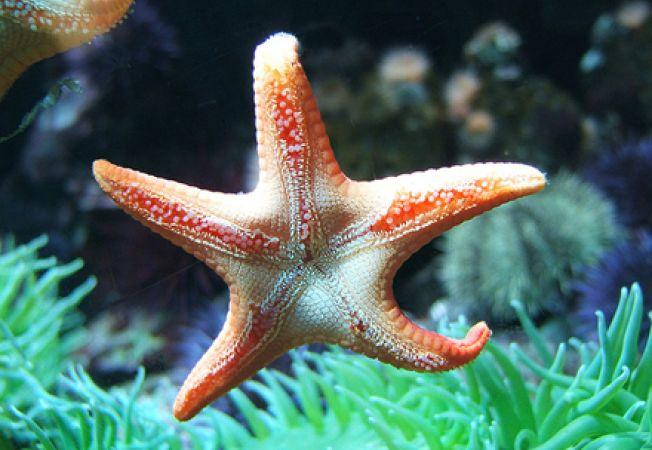 Cum sa ingrijesti steaua de mare
