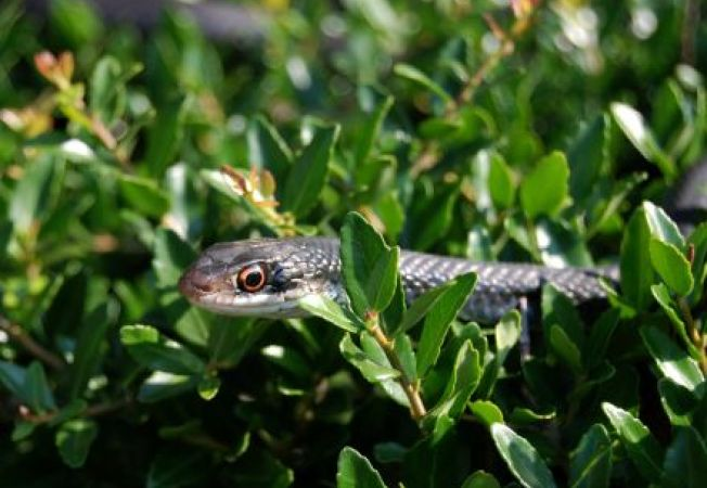 Cum scapi de serpii din gradina