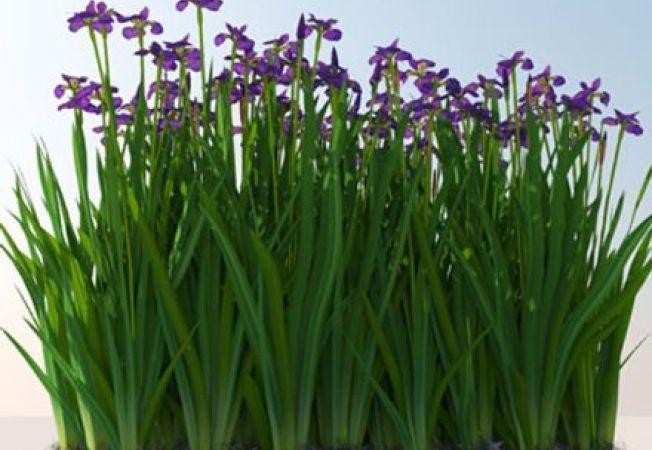 Cele mai comune probleme ale irisului