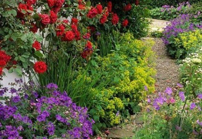 Ce sugereaza culorile plantelor din gradina ta