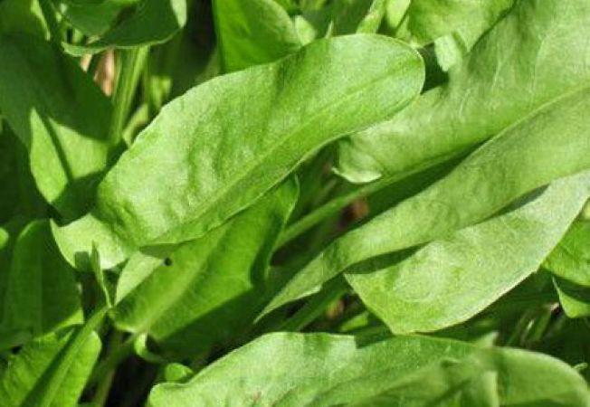 Beneficiile consumului de stevie