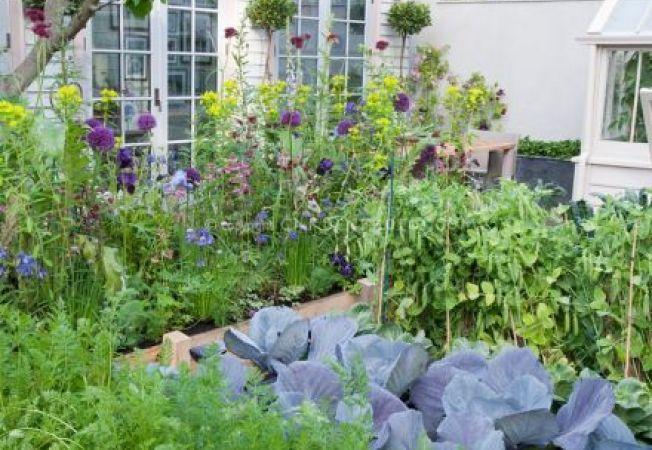 Plante companion: cultiva flori si legume la un loc!