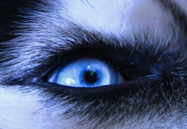 Afectiuni oculare la caini