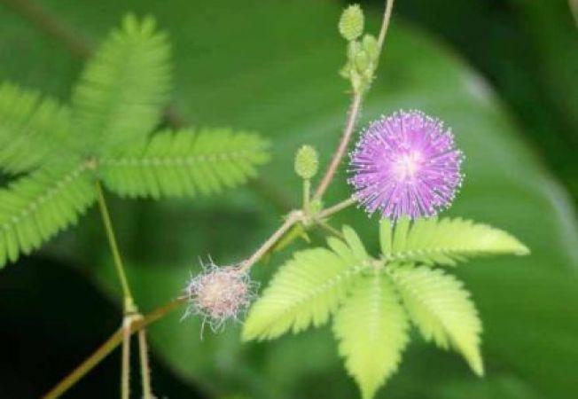 Cele mai interesante plante de apartament