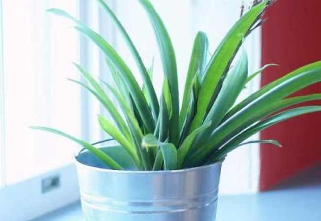 Ce trebuie sa stii despre revitalizarea plantelor bolnave