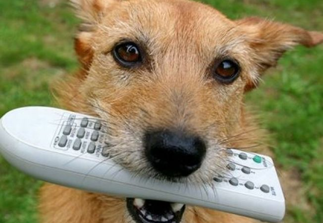 Americanii au lansat DOG TV, prima televiziune despre caini
