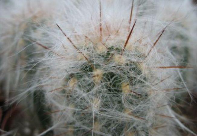 Cactusi interesanti de apartament