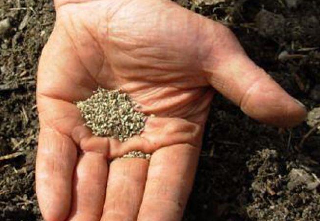 Ce trebuie sa stii cand cresti plante din seminte