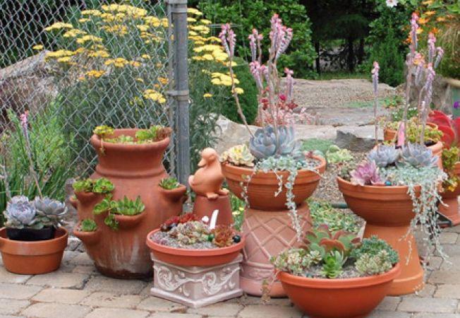 Plante desertice pentru gradina ta de vara