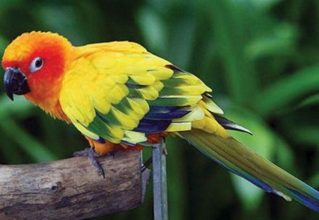 """Un papagal ratacit a spus politiei adresa unde locuia, dupa care a fost """"escortat"""" acasa"""