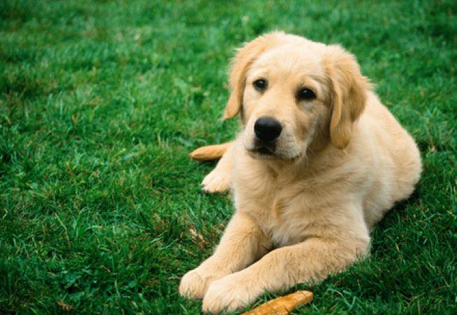 Stomatita la caini: simptome, diagnosticare, tratament